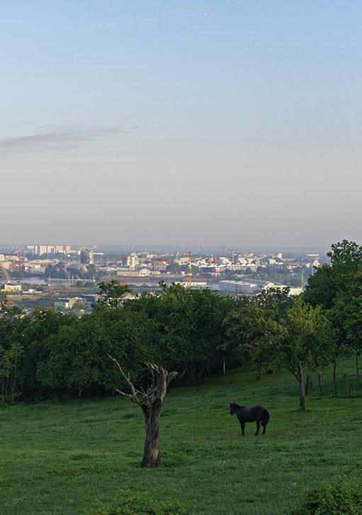 Parc Palmer et vue sur la métropole © V. Montier